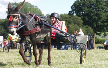 Donkey derby's great fun for any venue or event