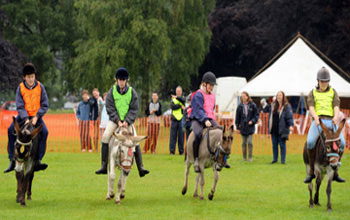 Donkey derbys are fantastic fundraisers, racing donkeys a great main attraction and supervised by our own staff hire Stonehill donkeys for your donkey derby event.