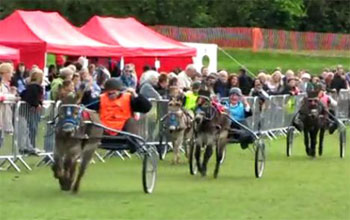 Donkey racing great fun book a driven donkey derby with Stonehill Donkeys donkey hire
