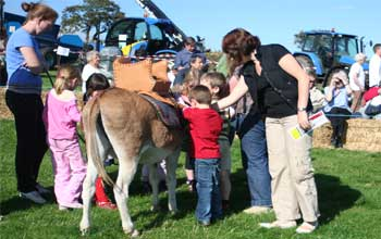 Donkey hire for education and entertainment, Donkeys can be very educational we come to your School or venue to entertain and educate children, they can ride and drive a donkey