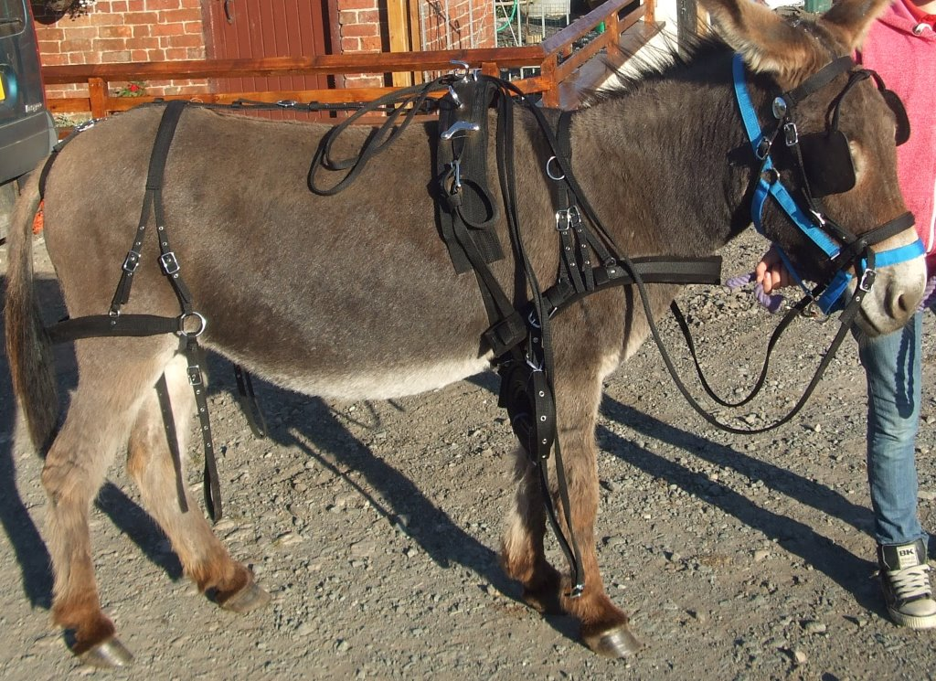 Donkey Harness synthetic