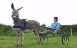 Stonehill Donkeys provide donkeys for  Special events and appearances, Christenings, Birthday Party, TV and Theatre church events stag and hen party's. Donkey hire for Great entertainment.