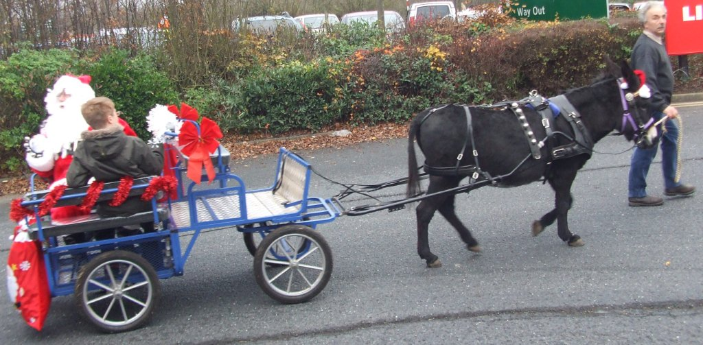 Daves Donkey hire special events delivering Santa this Christmas to Dobbies garden centre Shrewsbury Shropshire